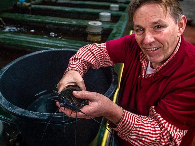 cursus viskwekerij jack met meerval
